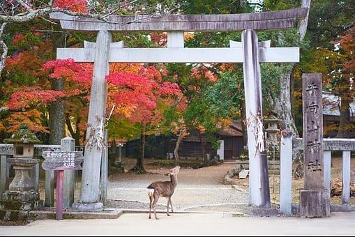 image-of-deer-under-temple-entrance-in-nara-city-japan